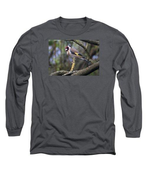 Goldfinch Long Sleeve T-Shirt by Richard Thomas