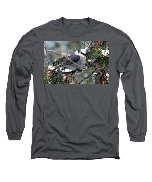 Gray Jay On A Snowy Pine Long Sleeve T-Shirt