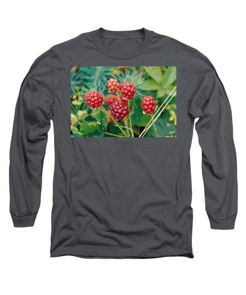 Highbush Blackberry Rubus Allegheniensis Grows Wild In Old Fields And At Roadsides Long Sleeve T-Shirt