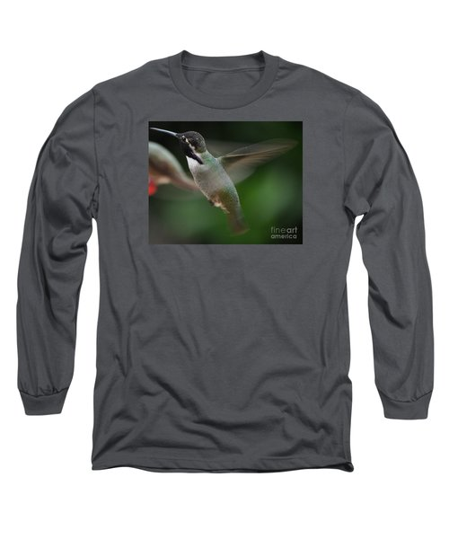 Long Sleeve T-Shirt featuring the photograph Hummingbird Male Anna In Flight Over Perch by Jay Milo