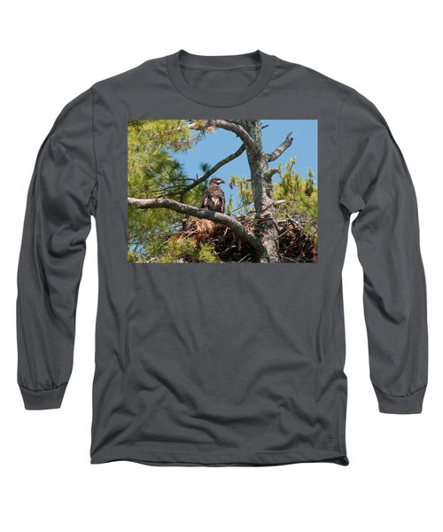 Long Sleeve T-Shirt featuring the photograph Immature Bald Eagle by Brenda Jacobs
