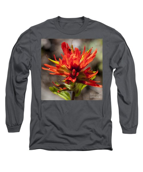Long Sleeve T-Shirt featuring the photograph Indian Paintbrush by Belinda Greb