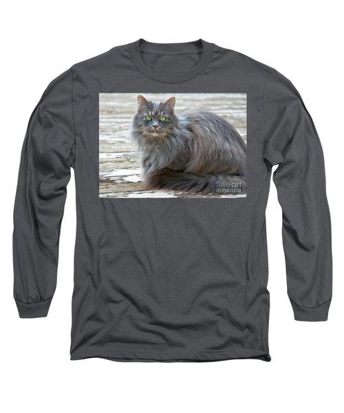 Long Haired Gray Cat Art Prints Long Sleeve T-Shirt