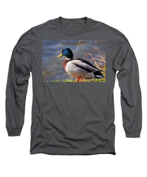 Male Mallard Duck Long Sleeve T-Shirt