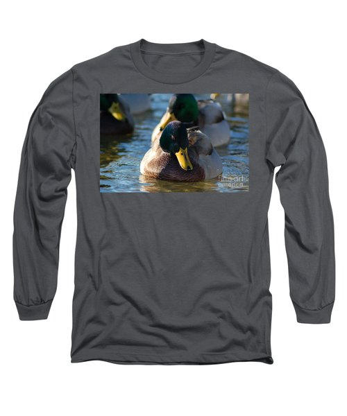 Mallard In The Morning Sun Long Sleeve T-Shirt by Patrick Shupert