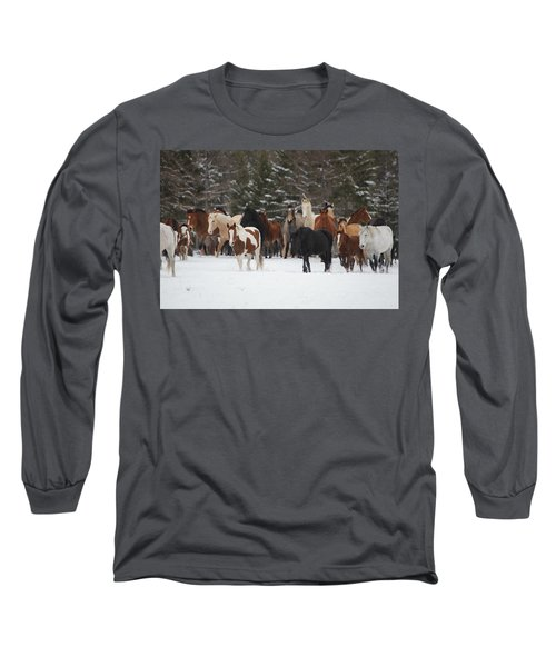Montana Herd Long Sleeve T-Shirt by Diane Bohna