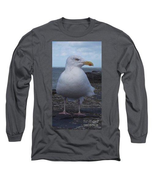 New Quay Gull  Long Sleeve T-Shirt by John Williams