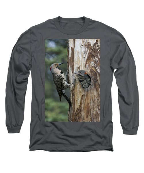 Northern Flicker Parent At Nest Cavity Long Sleeve T-Shirt