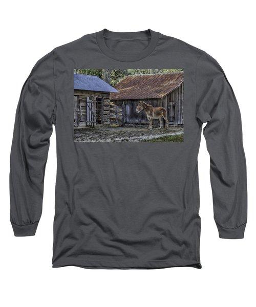 Old Red Mule Long Sleeve T-Shirt by Lynn Palmer