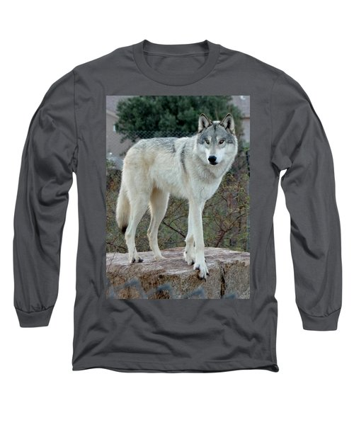 Out Of Africa Wolf  Long Sleeve T-Shirt