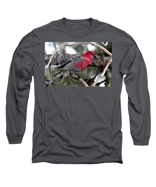 Pine Grosbeak On Ponderosa Pine Tree Long Sleeve T-Shirt