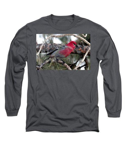 Pine Grosbeak On Ponderosa Pine Tree Long Sleeve T-Shirt