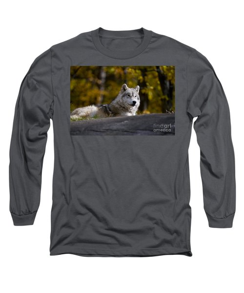 Long Sleeve T-Shirt featuring the photograph Resting Arctic Wolf On Rocks by Wolves Only