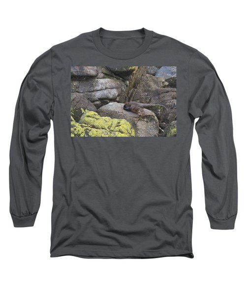 Resting Seal Long Sleeve T-Shirt by Stuart Litoff