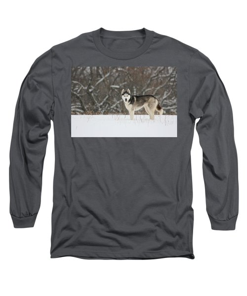 Long Sleeve T-Shirt featuring the photograph Siberian Husky 20 by David Dunham