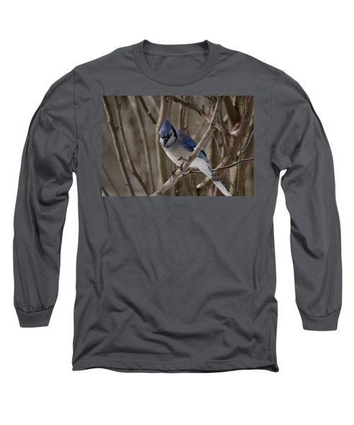 Long Sleeve T-Shirt featuring the photograph Sitting Pretty by David Porteus