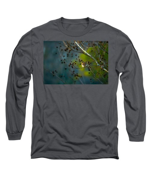 Sparrow In The Warm Light Long Sleeve T-Shirt by Shelby  Young