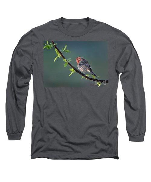 Song Bird In Spring Long Sleeve T-Shirt