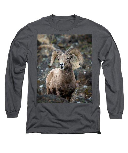 Long Sleeve T-Shirt featuring the photograph Startled Ram by Steve McKinzie