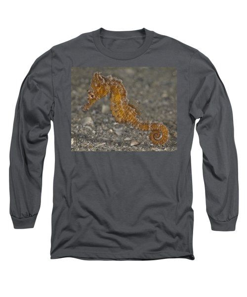 The Baby Seahorse Long Sleeve T-Shirt