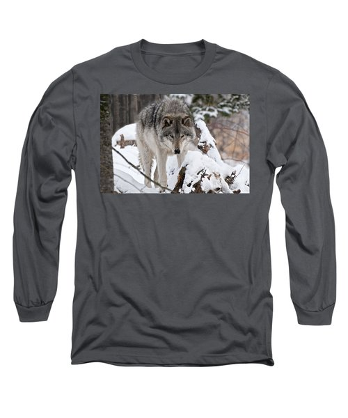 Long Sleeve T-Shirt featuring the photograph Winter Timber Wolf by Wolves Only