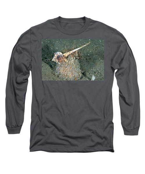 Woodcock Murex Depositing Eggs Long Sleeve T-Shirt