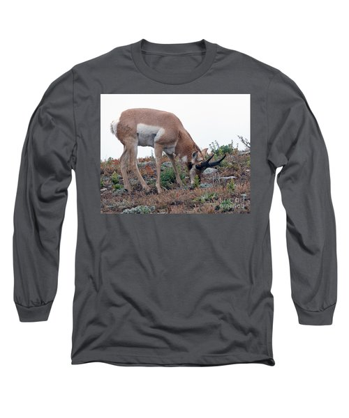 Long Sleeve T-Shirt featuring the photograph Antelope Grazing by Art Whitton