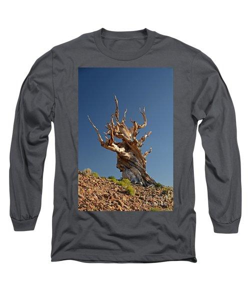 Bristlecone Pine Long Sleeve T-Shirt