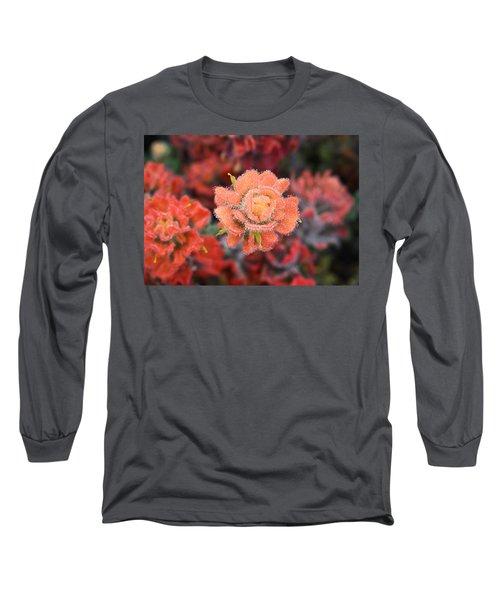 Coastline Color Long Sleeve T-Shirt