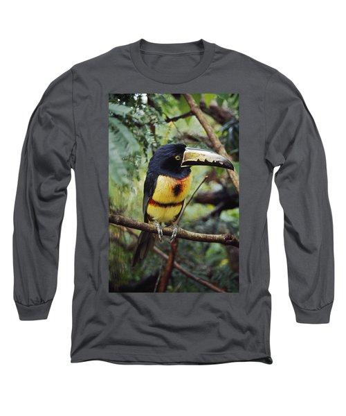Collared Aracari Pteroglossus Long Sleeve T-Shirt
