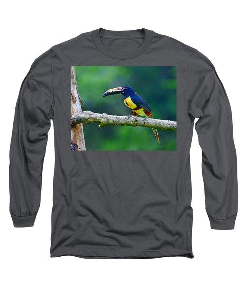 Collared Aracari Long Sleeve T-Shirt