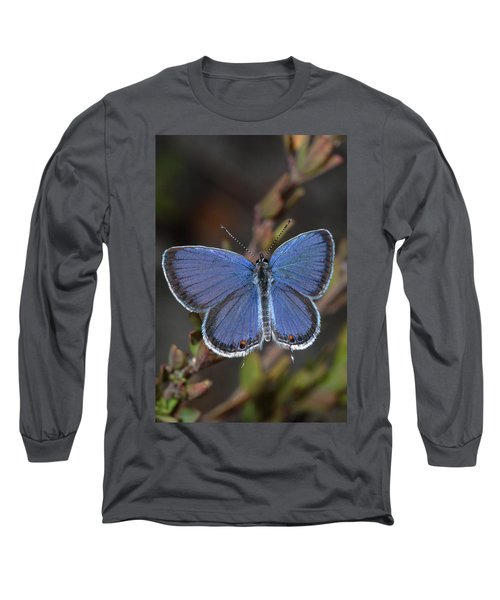 Eastern Tailed Blue Butterfly Long Sleeve T-Shirt by Daniel Reed