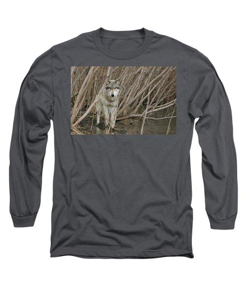 Looking Wild Long Sleeve T-Shirt