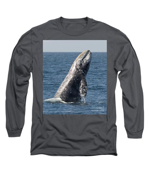 Breaching Gray Whale In Dana Point Long Sleeve T-Shirt by Loriannah Hespe
