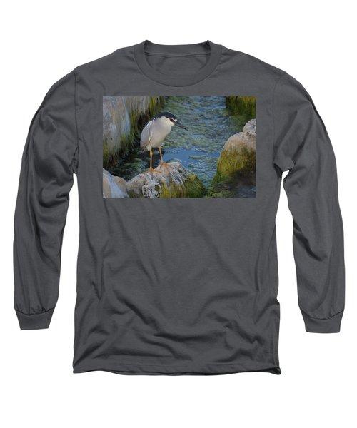 Black Crowned Night Heron Long Sleeve T-Shirt by Greg Graham