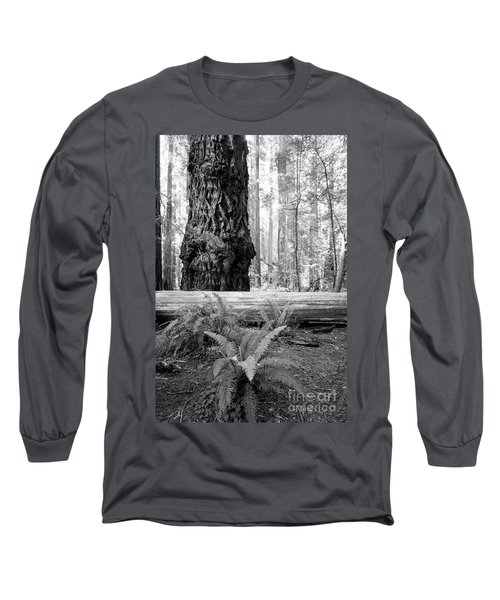 Coastal Redwoods  Long Sleeve T-Shirt