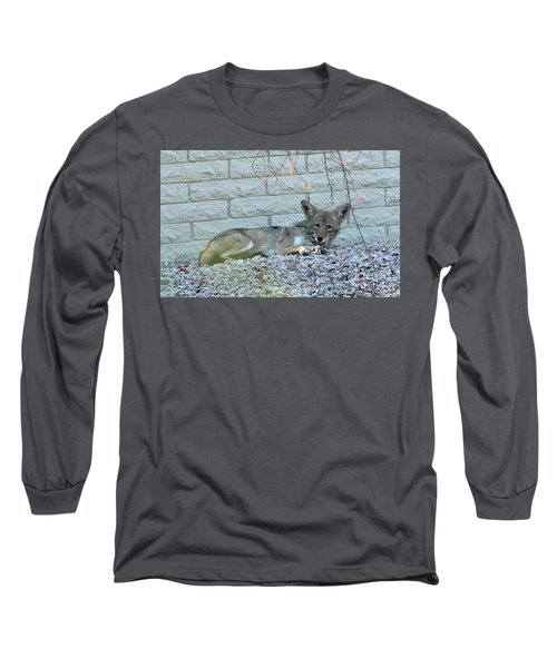 Coyote Long Sleeve T-Shirt by Anne Rodkin