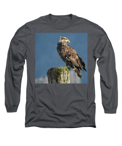 Immature Bald Eagle Long Sleeve T-Shirt by Brian Chase