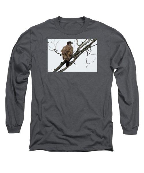 Juvenile Eagle  Long Sleeve T-Shirt by Steven Clipperton