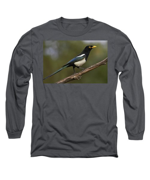 Yellow-billed Magpie Long Sleeve T-Shirt