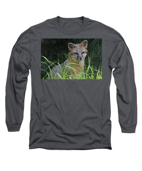 Gray Fox In The Grass Long Sleeve T-Shirt