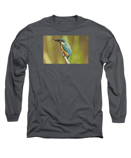 Kingfisher Long Sleeve T-Shirt by Paul Neville