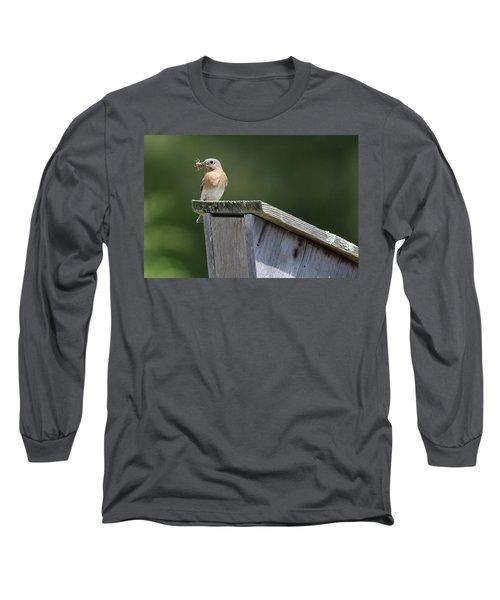Eastern Bluebird Calverton New York Long Sleeve T-Shirt