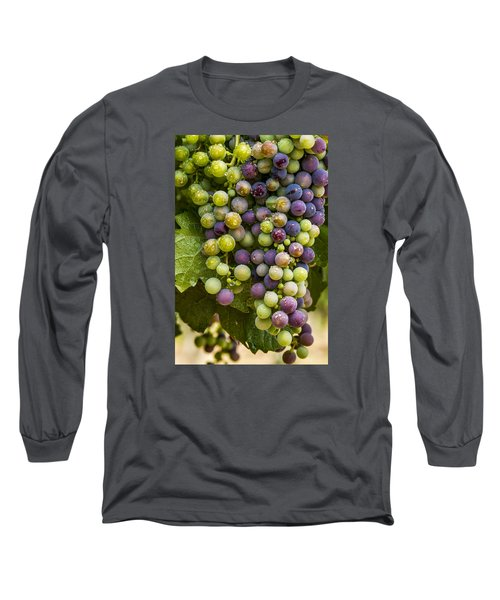 Red Wine Grapes Hanging On The Vine Long Sleeve T-Shirt