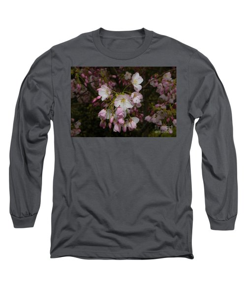 Silicon Valley Cherry Blossoms Long Sleeve T-Shirt