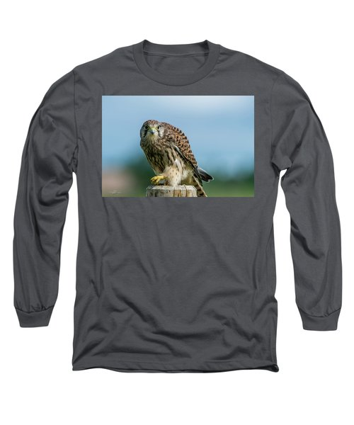 A Beautiful Young Kestrel Looking Behind You Long Sleeve T-Shirt