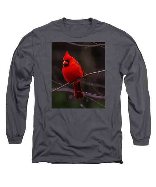 A Cardinal In January  Long Sleeve T-Shirt