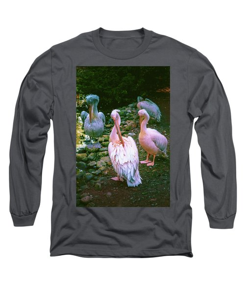 a group of swans near the pond on a Sunny summer day Long Sleeve T-Shirt