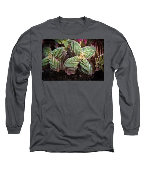 A Succulent Plant Long Sleeve T-Shirt by Catherine Lau