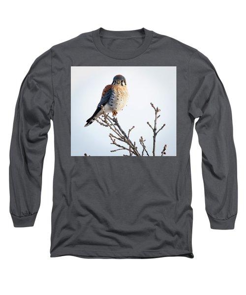 American Kestrel At Bender Long Sleeve T-Shirt